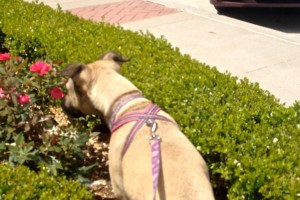 Clara stops to smell the roses