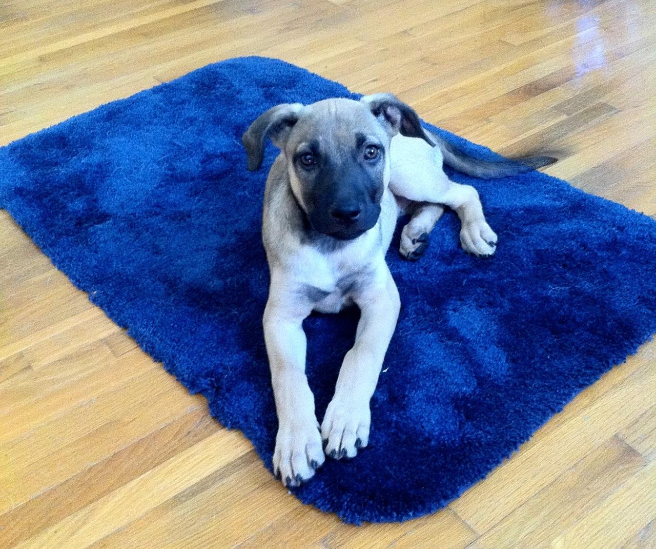 roll up dog com mat petmaker portable bed ip travel floors walmart floor