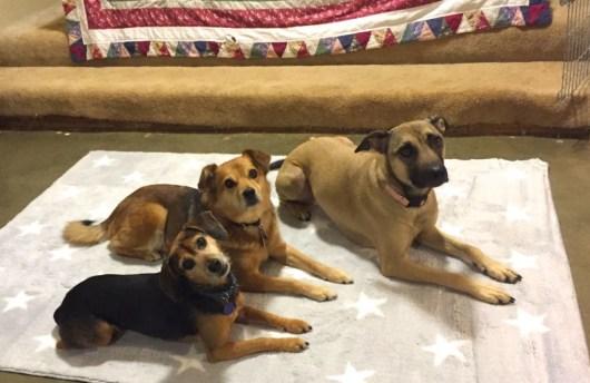 Three dogs on rug