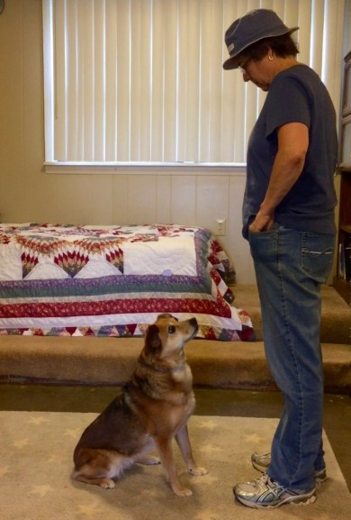 A brown dog is sitting attentively in front of a woman wearing bluejeans, a blue tee shirt, and a hat. the dog is staring at the woman's left hand as she reaches into her pocket. Letting staring at the food get reinforced is a training error.