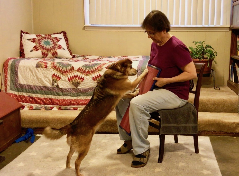 Brown dog Summer on her hind legs scratching the nail board