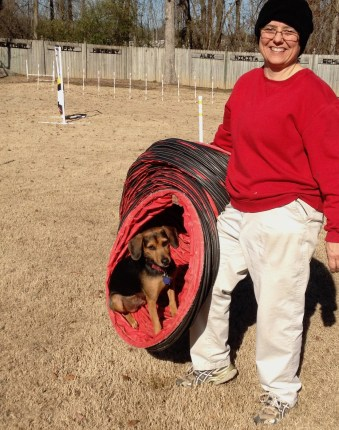 Humorous picture of a woman holding an agility tunnel with a small black dog sitting inside it