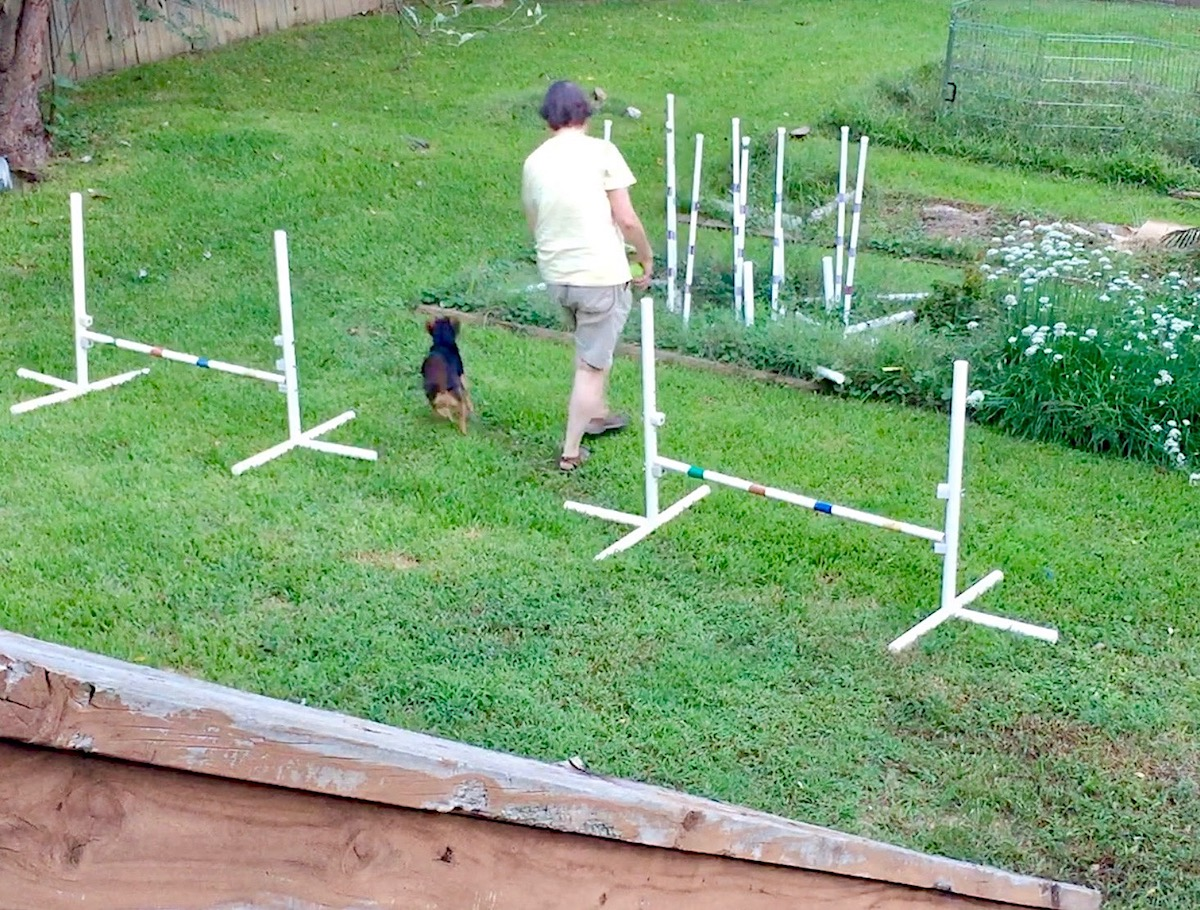 Eileen and little black hound dog Zani in agility sequence with Zani zooming away