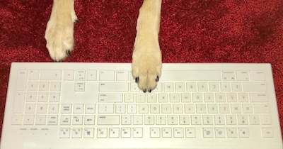 dog paws on keyboard for IAABC writing mentorship