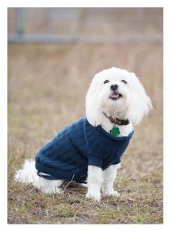 child-family-lifestyle-pet-dog-event-documentary-Christmas-holiday-fur baby--2015-St Mary's GA-Kingsland GA-Jacksonville Beach FL-Amelia Island FL-Fernandina Beach FL-photographer-eileen-davis-photography