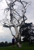 Ferment by Roxy Paine. A dendroid sculpture that explores the complex interrelationship between nature and technology.