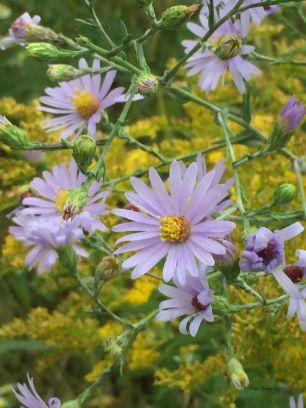 Flowers still in bloom mid-September