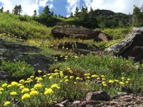 Wildflowers covered the hillsides