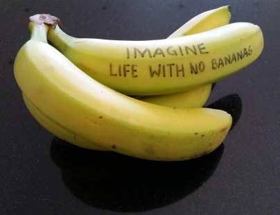 Bananas with 'Imagine life with no bananas' written on one