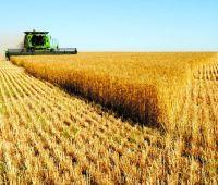 Украинский аграрный экспорт в ЕС вырос на 25%