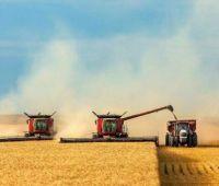 Украина уже экспортировала более 42 миллионов тонн зерна