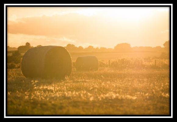 on farm assesment