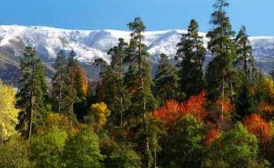الحديقة الوطنية بورجومي