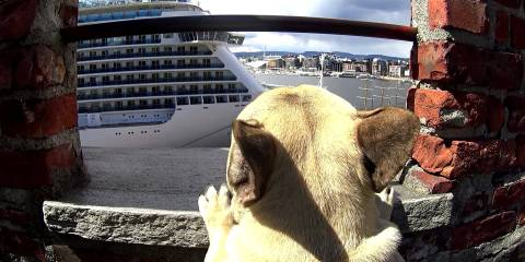 Visit Oslo with Einar The Frenchie!
