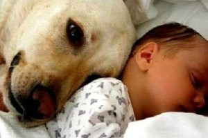 Cats and dogs meeting babies for the first time