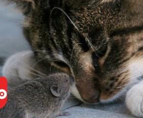 5 uvanlige dyrevennskap