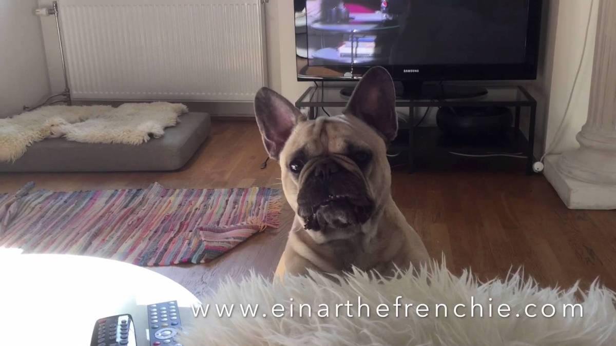 Hunden Einar kjefter på eierne sine!
