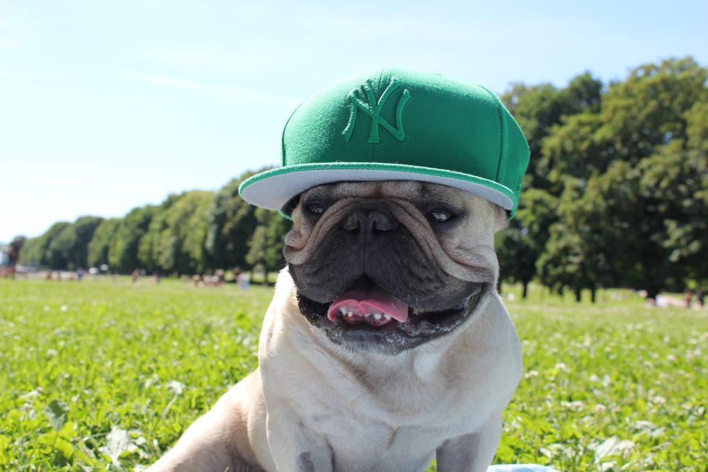 Slik beskytter du hunden din i sommervarmen!