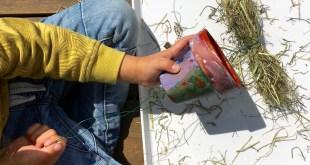 Wir basteln ein Ohrwurmhotel für den Garten - DIY mit Kindern für Garten Nützlinge