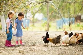 Wir fahr´n auf die Farm!