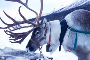 Spann Rudolphs Freunde für dich ein!