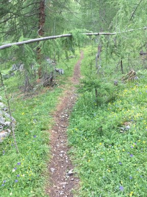Trail in Livigno