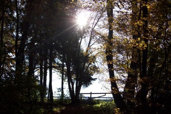 Wandern im Wald, www.einfachmalraus.net