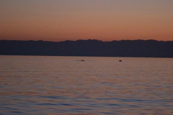 Delfine im Sonnenaufgang, einfachmalraus.net