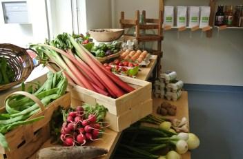 Frisches Gemüse und Bio-Eier
