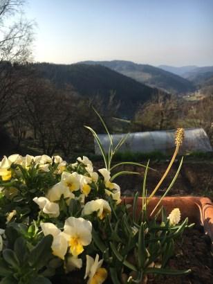 Blick vom Gästehaus