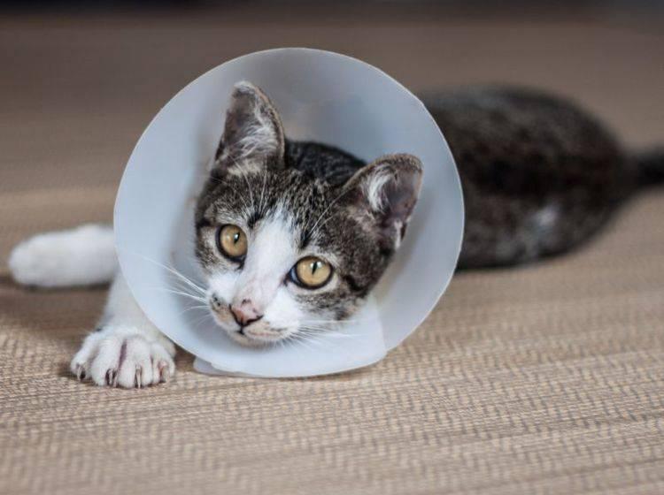 Wie Teuer Ist Es Eine Katze Zu Kastrieren Kosten Beim Tierarzt