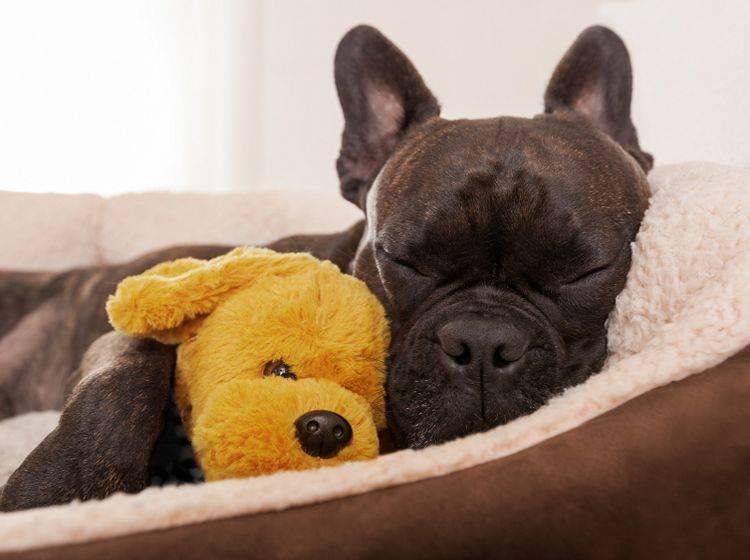 Wie Viel Schlaf Braucht Ein Hund