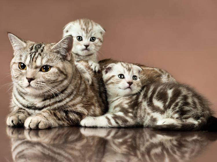 Eigene Katzenzucht Anfangen Wichtige Grundlagen