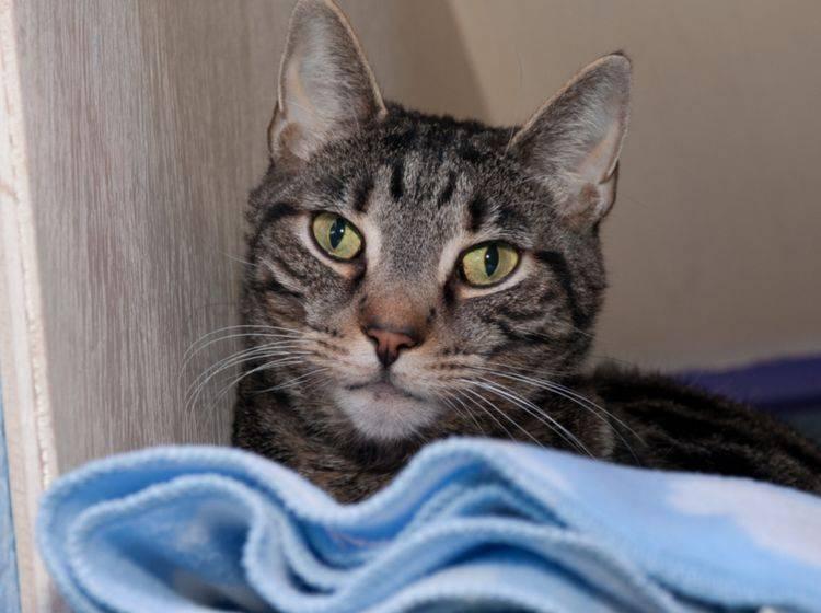 Schutzgebühr Für Katzen Wofür Ist Sie Gut