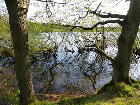 Schleswig-Holstein See im Wald Foto: Dagmar Falk