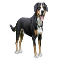 Dog - Perro