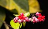 Blume1neu