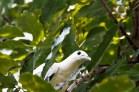 Vogelneu