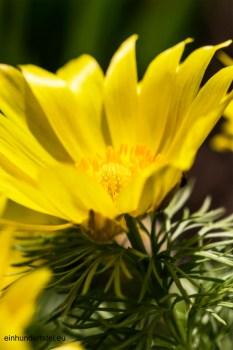 Blumen19