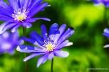 Blumen9