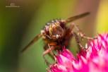 EH1_Insekt7