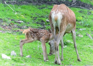Tierpark Hirschfeld240618_022
