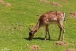 Tierpark Hirschfeld240618_086