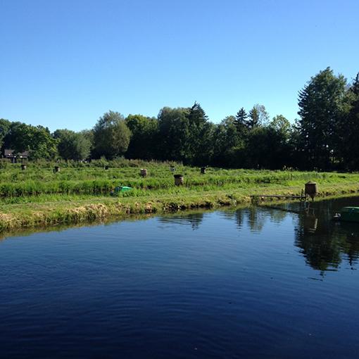 Fischweiher, frischer Fisch, Dachauer Umland