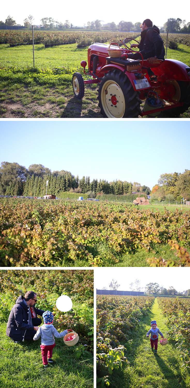 Beeren Pflücken bei München, Himbeeren, Heidelbeeren, Erdbeeren, Karlsfeld, Dachau, roter Traktor, Erdbeerfeld