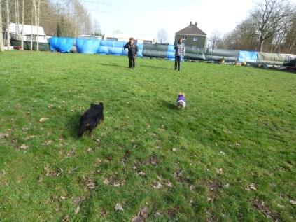 Hundefreunde auf dem Freilauf