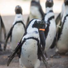 Bus Trip: Lincoln Park Zoo