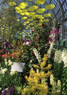 Bus Trip: Garfield Park Spring Flower Show