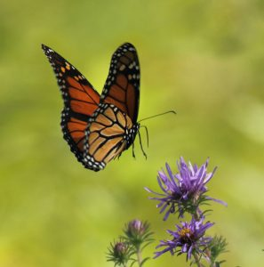 Bus Trip: Butterflies and Blooms at the Chicago Botanic Gardens