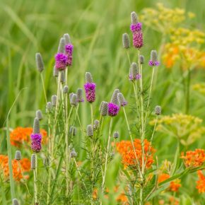 Native Plants, Healthy Soil and Climate Change